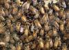 Jodi Bee Honey Farm