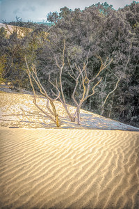 Silver Dunes State Park (3)