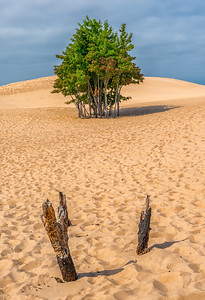 Silver Dunes State Park