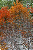 First snowfall and fall foliage color along Highway 2 in rural Michigan, USA.