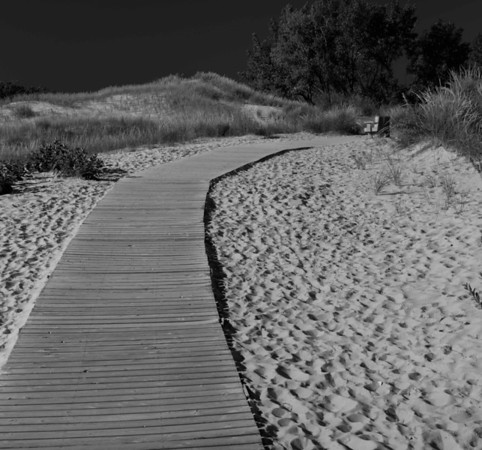 Boardwalk through Dunes (in Black and White)