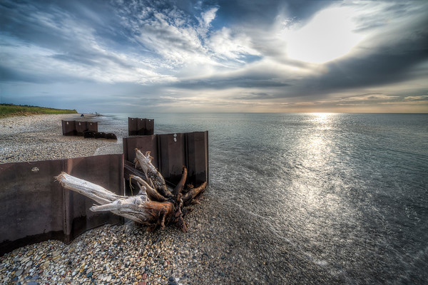 Driftwood on Point Betsie Shoreline