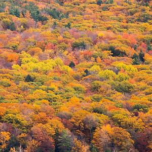 Fall Trees, Glen Lake