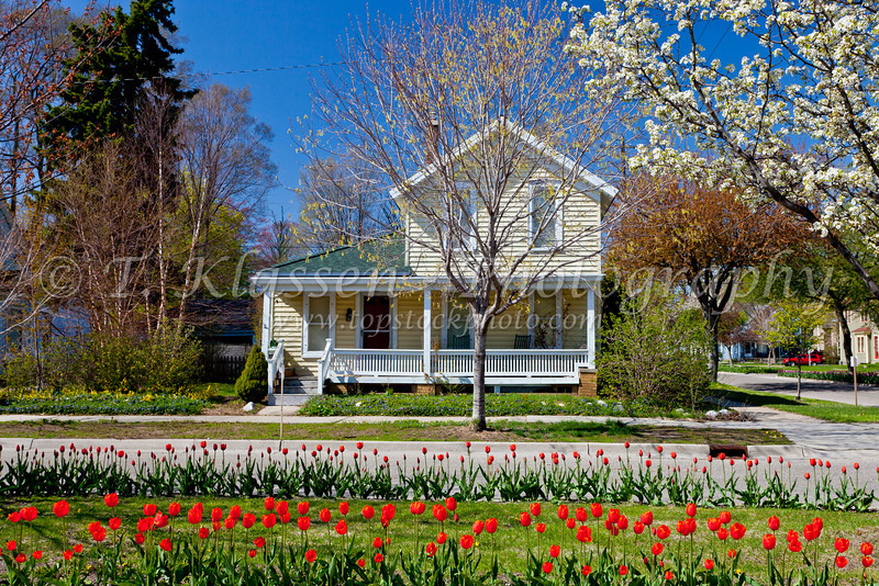 A street with tulips on the boulevard in the historic district of Holland, Michigan, USA.