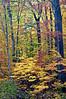 MI 085                      Fall color in Warren Woods State Park in Michigan.