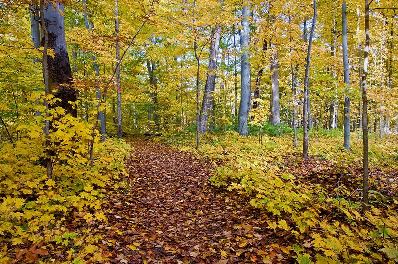 MI 049                     Autumn colors at Warren Woods State Park in Michigan.