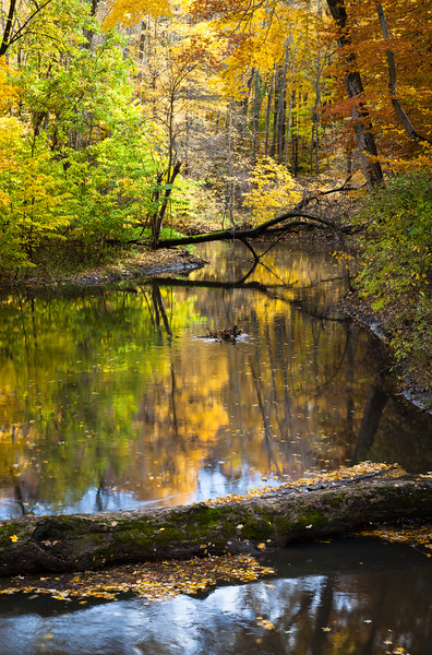 Fall Color brightens up the shores of the Galien River. Sawyer, MI<br /> <br /> MI-091025-0025