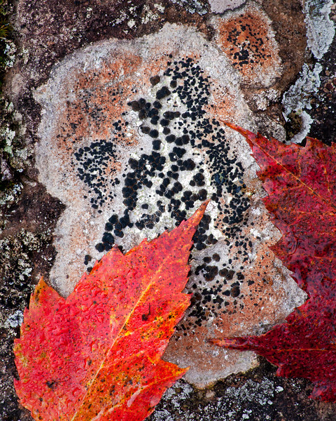 MI 180                          Autumn leaves and lichen near the Michigamme River, Upper Peninsula, Michigan.