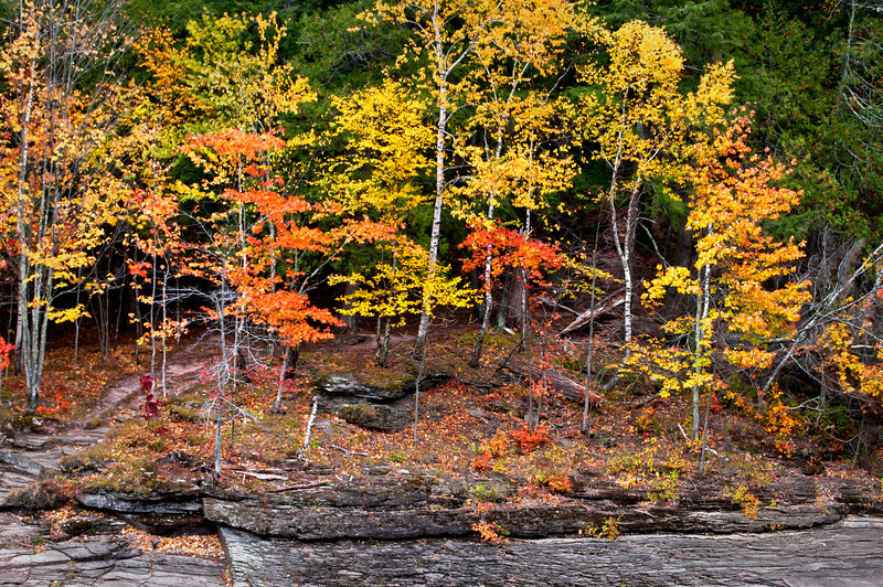 M 153                        Autumn color along the exposed shale riverbed of the Presque Isle River in the Porcupine Mountains Wilderness State Park, Michigan.