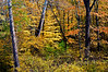 MI 084                      Fall color along a small stream near Three Oaks, Michigan.
