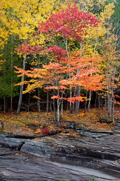 M 158                          Autumn color along the exposed shale riverbed of the Presque Isle River in the Porcupine Mountains Wilderness State Park, Michigan.