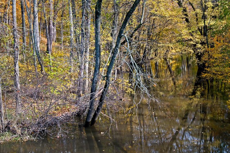 MI 083                      Fall color along a small stream near Three Oaks, Michigan.