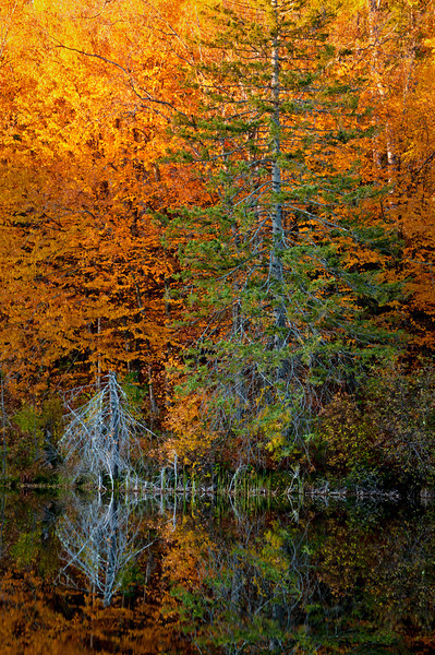MI 162                       Autumn colors illuminated by the light of a setting sun are reflected in the calm surface of the Michigamme River near Crystal Falls in Michigan's Upper Peninsula.