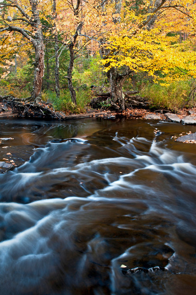 M 199                           Autumn color at dusk on the Sturgeon River in Michigan's Upper Peninsula.