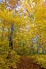 MI 050                      Autumn colors at Warren Woods State Park in Michigan.