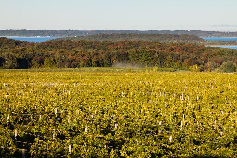 Chateau Grand Traverse vineyard. Old Mission Point, MI<br /> <br /> MI-111002-0050