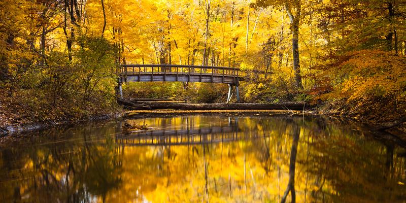 Warren Woods State Park glows golden during Autumn. Sawyer, MI<br /> <br /> MI-091025-0065