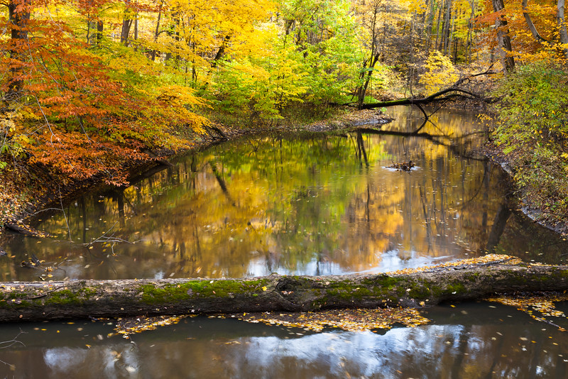 Fall Color brightens up the shores of the Galien River. Sawyer, MI<br /> <br /> MI-091025-0017