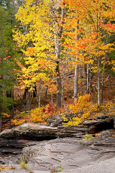 M 156                       Autumn color along the exposed shale riverbed of the Presque Isle River in the Porcupine Mountains Wilderness State Park, Michigan.