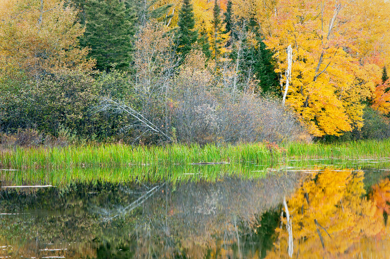 MI 169                        Fall colors on the Michigamme River in the Upper Peninsula of Michigan.