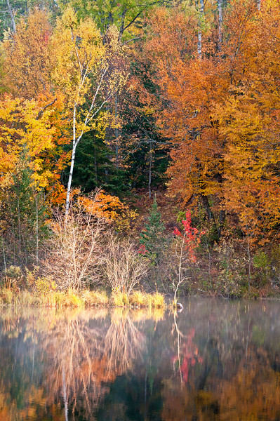 MI 177                      Vibrant fall colors at sunrise on the Michigamme River near Crystal Falls in the Upper Peninsula of Michigan.