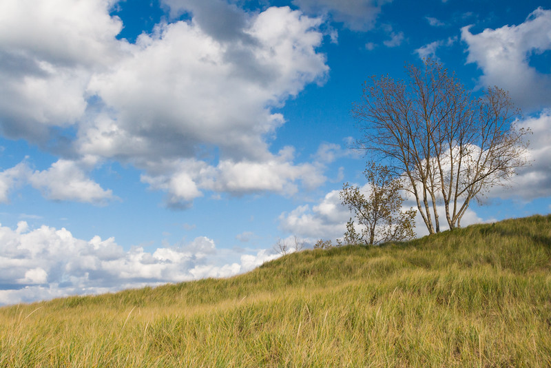 Dune grasses in Tiscornia Park. St. Joseph, MI<br /> <br /> MI-081026-0147