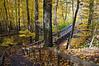 MI 086                    Wooden steps lead into Warren Woods State Park in Michigan.