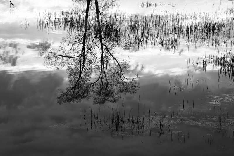 MI 231<br /> <br /> Early morning reflections in a wetland conservation area in southeastern Michigan.
