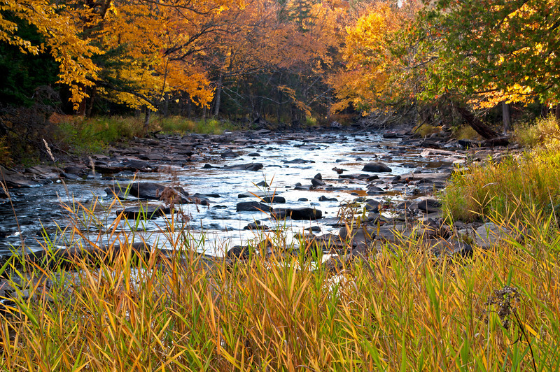 MI 198<br /> <br /> Autumn color along the Sturgeon River on the first day of October, Upper Peninsula, Michigan.