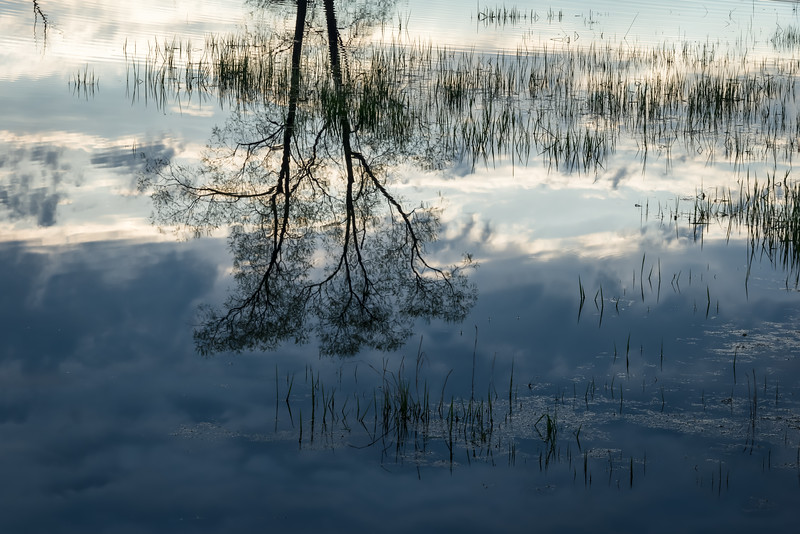 MI 232<br /> <br /> Early morning reflections in a wetland conservation area in southeastern Michigan.