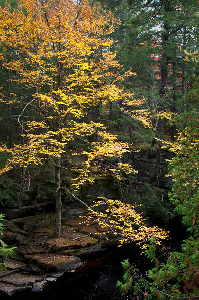 MI 195<br /> <br /> Fall color on the banks of the Sturgeon River in the Upper Peninsula of Michigan.