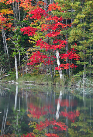 Code Red - Council Lake (Hiawatha National Forest - Upper Michigan)