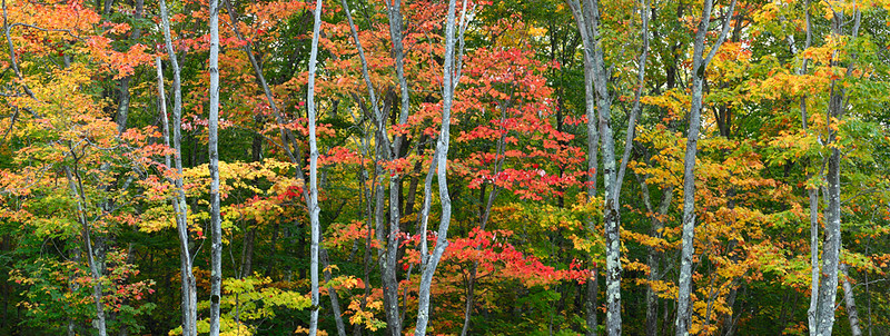 Pictured Fall - County Highway 58  (Pictured Rocks National Lakeshore)