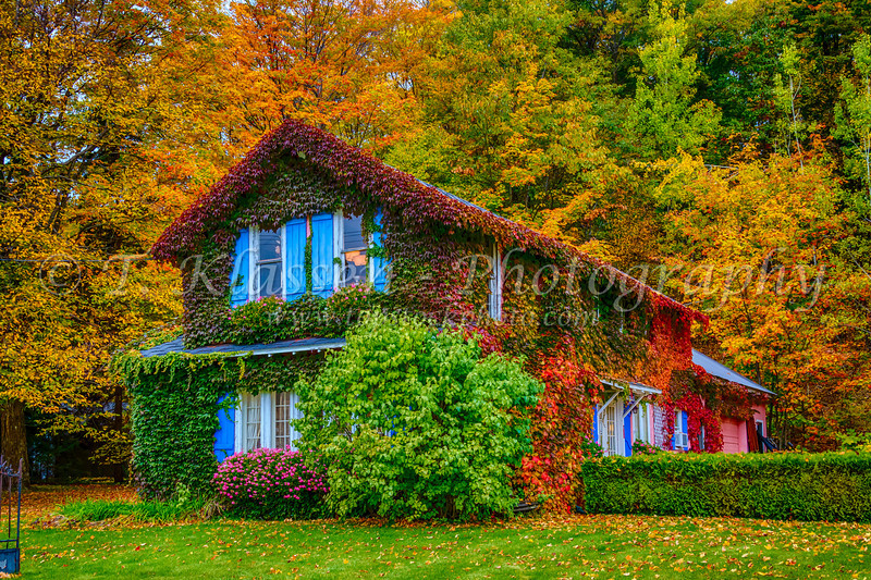 A vine covered Antique shop with fall foliage color in Petoskey, Michigan, USA.