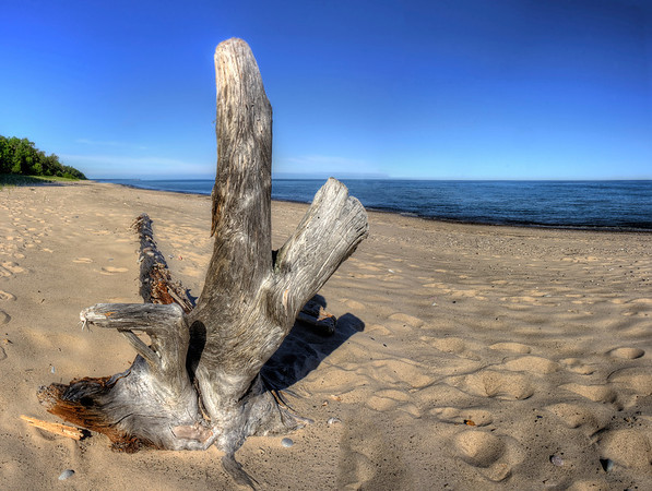 Driftwood at Pictured Rocks