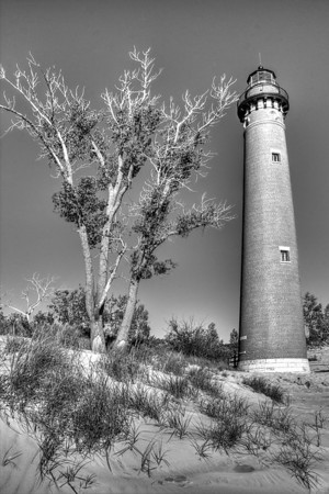 The Lighthouse and the Tree