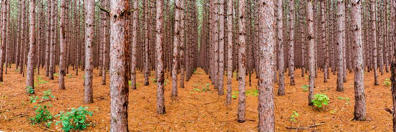 Forest in Sleeping Bear Dunes
