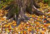Fall leaves on the ground near Tahquamenon Falls, Michigan, USA.