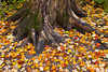 Fall leaves on the ground near Tahquamenon Falls, Michigan, USA.