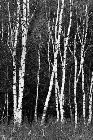 Borches in Black and White