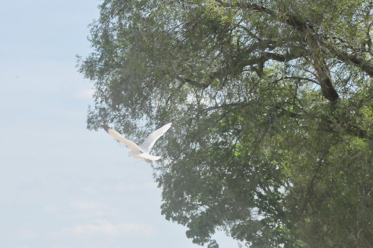 Bird in Traverse City, Michigan