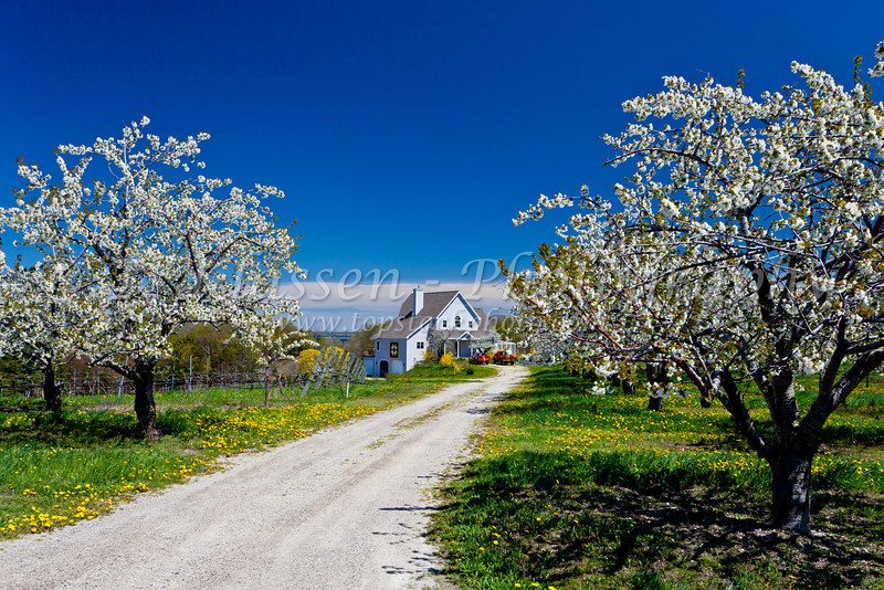 An orchard farm house on the Old Mission Peninsula, Michigan, USA.