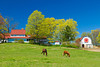 A ranch home with barn and horses grazing in the pasture on the Old Mission Peninsula, Michigan, USA.