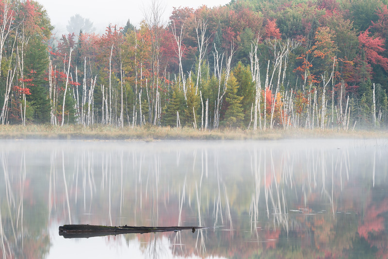 Early morning light on Council Lake. Hiawatha National Forest, MI<br /> <br /> MI-080926-0022