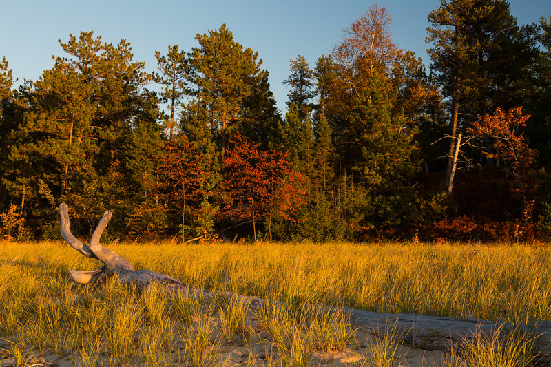 Fall color along Miners Beach. Picture Rocks National Lakeshore, MI<br /> <br /> MI-120929-0196