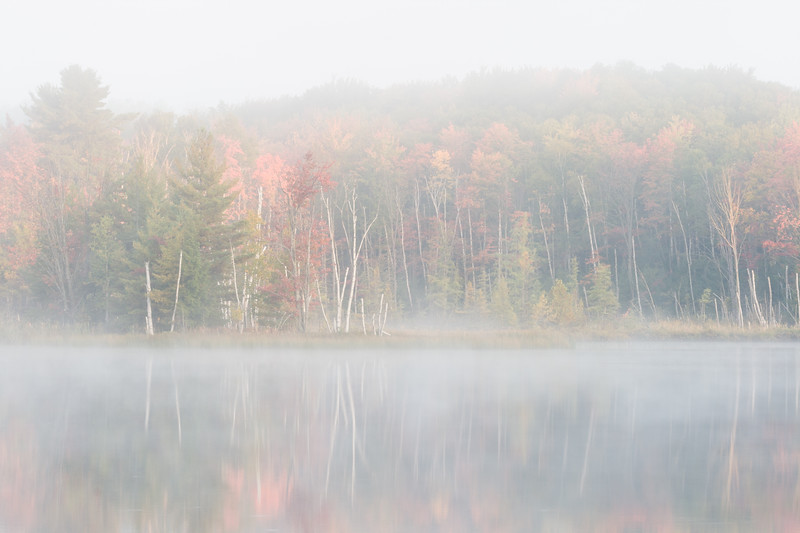 Autumn Color and Fog III