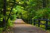 Tahquamenon Falls State Park trail. Chippewa County, MI<br /> <br /> MI-110930-0249