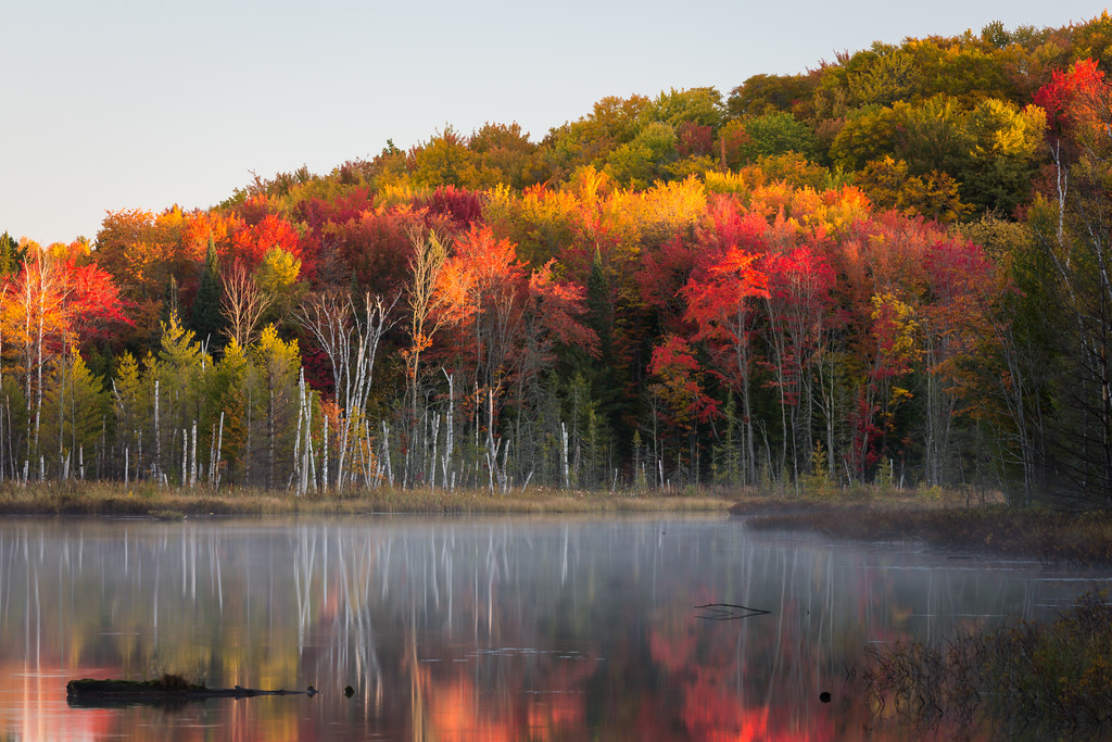 Fall color along Council Lake. Hiawatha National Forest, MI<br /> <br /> MI-120930-0386