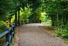 Tahquamenon Falls State Park trail. Chippewa County, MI<br /> <br /> MI-110930-0230