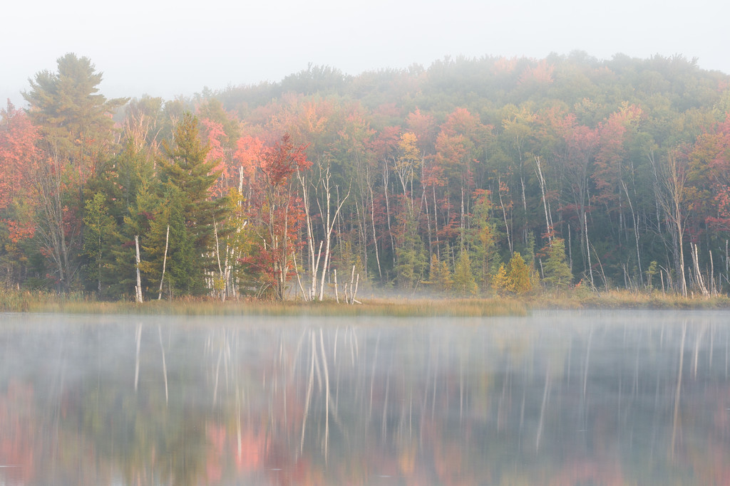 Autumn Color and Fog II